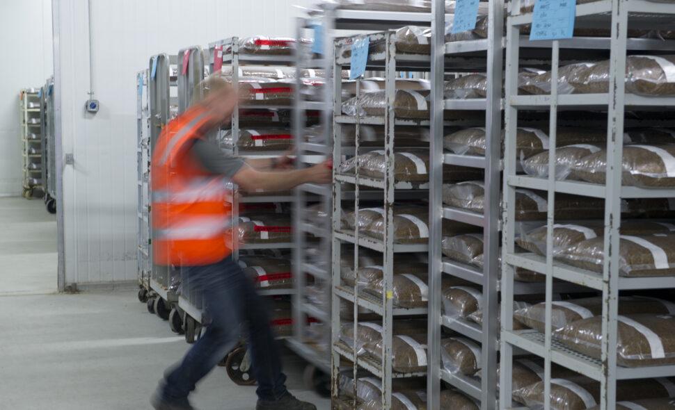 Spawn Manufacture (Mushroom Seed)